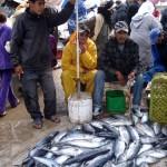 El Jadida : Interdiction au public de l'accès au port … quelle alternative pour les métiers informels