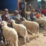 7 souks de bétail dont celui de Larbaâte laâounate fermés pour non-respect des mesures sanitaires