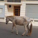 La « Deauville » marocaine…se ruralise