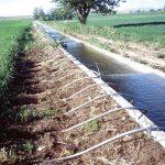 El Jadida : La pénurie et le vol des eaux d'irrigation, une réelle menace pour la production saisonnière de la betterave à sucre