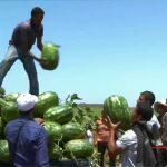 Covid-19 : POURSUITE NORMALE DE L'ACTIVITÉ AGRICOLE AU NIVEAU DE LA RÉGION CASABLANCA – SETTAT